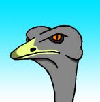 Ostrich's Photo