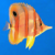 Platypus's Photo