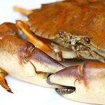 Crustacean Freak's Photo